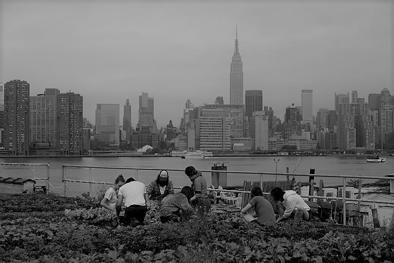 Un groupe cultivant un potager à côté d'une grande ville