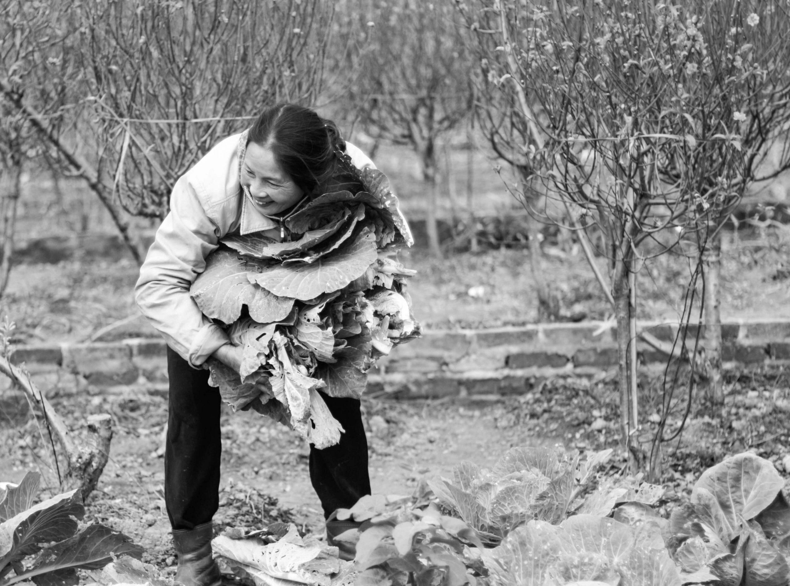 Une femme récoltant des légumes au début du printemps