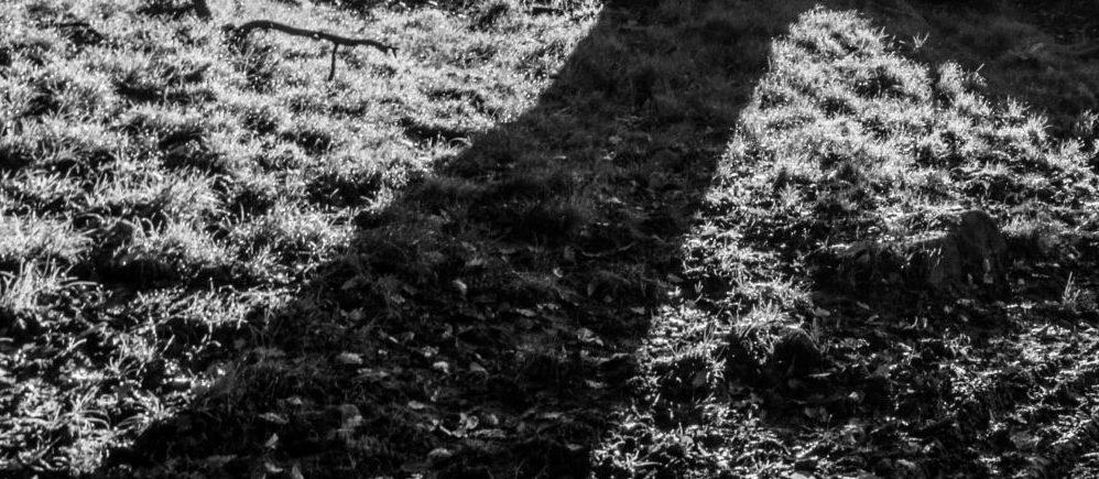 Deux champs délimités par un muret de pierre dans le Yorkshire
